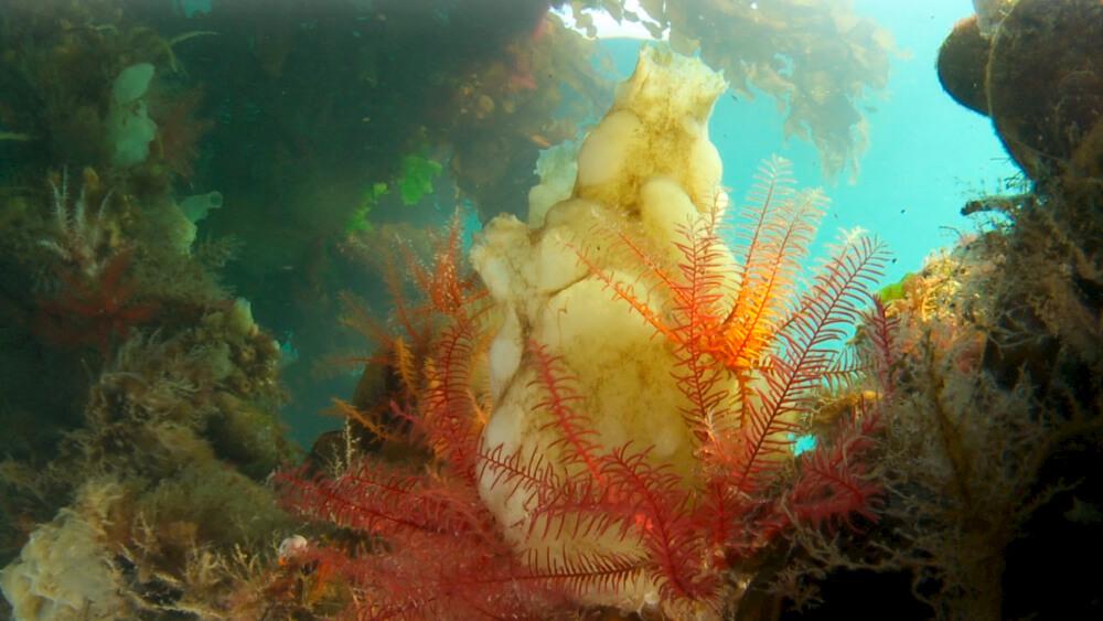 microcean-photogramme-du-film-jungle-aquatique-3